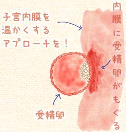 横浜市戸塚区受精卵の仕組み